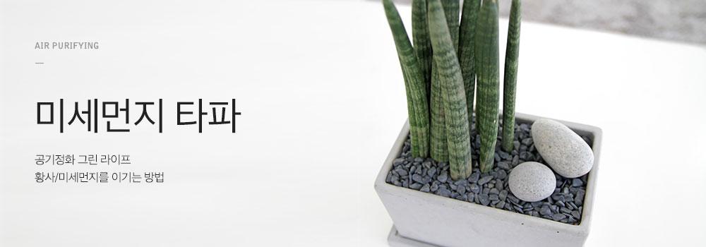 황사세끼 식물편