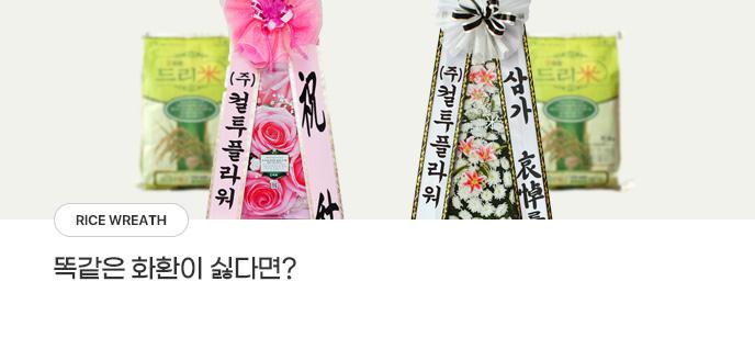 공기정화식물